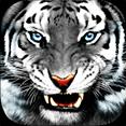 Tiger King Slots